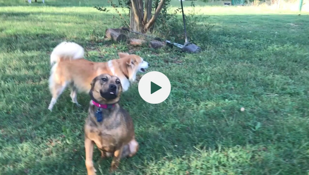02-27-2019-Video-Picture-of-dogs